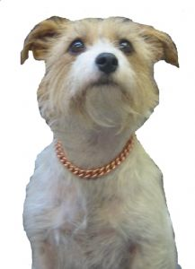 "COPPER MAGNETIC THERAPY DOG CHAIN COLLAR 6"" TO 12""  (152MM-305MM)"